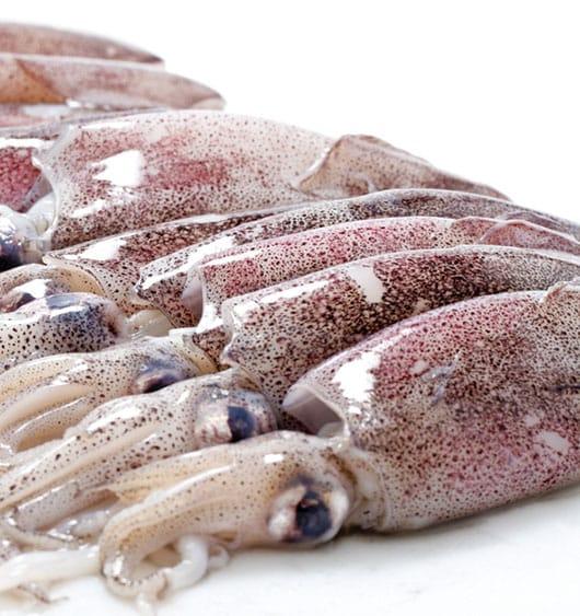 Foto: Calamares aleta larga. © Shutterstock.