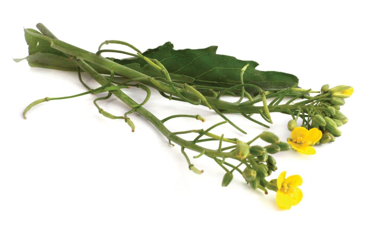 Foto: Flores de nabo. © Ediciones Larousse.