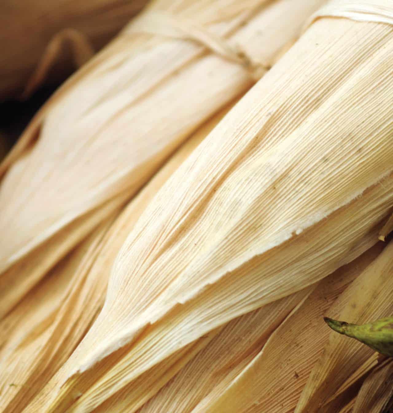 Foto: Hoja seca de maíz. (Bertha Herrera).