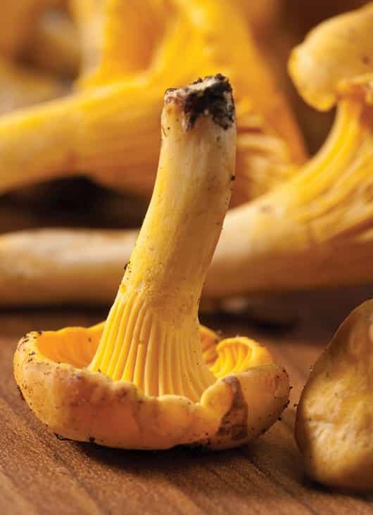 Foto: Hongo amarillo. © Shutterstock.