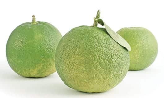Foto: Naranjas verdes. © Shutterstock.