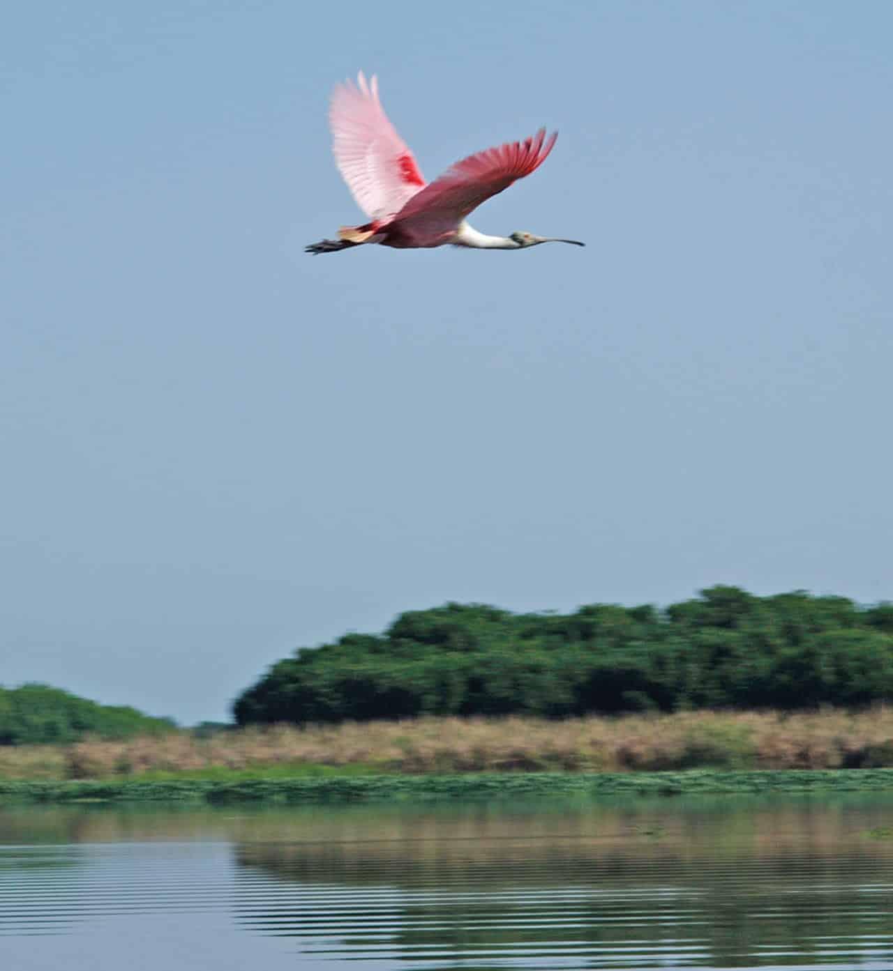 Foto: Parque Nacional La Tovara. (Bertha Herrera).