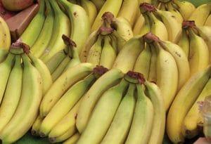 Fruto, plátano Tabasco