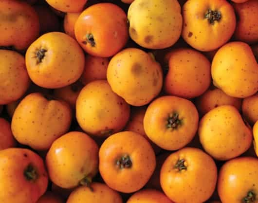 Foto: Fruto: tejocotes. © Shutterstock.