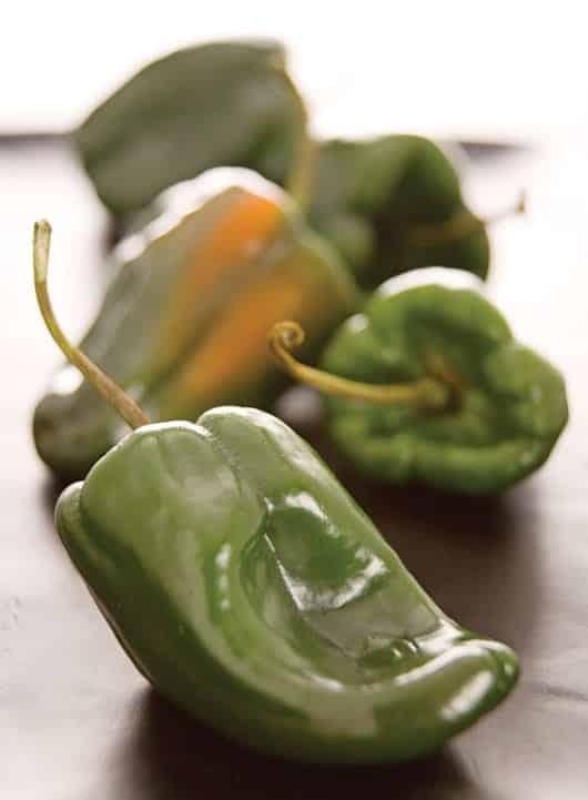 Foto: Chiles poblanos. © Shutterstock.