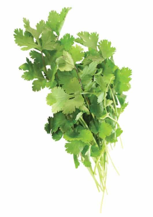 Foto: Racimo de cilantro. © Shutterstock.